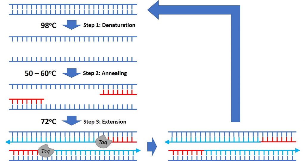 PCR cycle overview