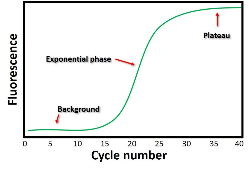 qPCR amplification plot annotated