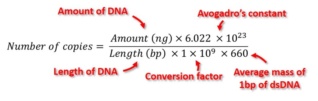 DNA copy number equation qPCR